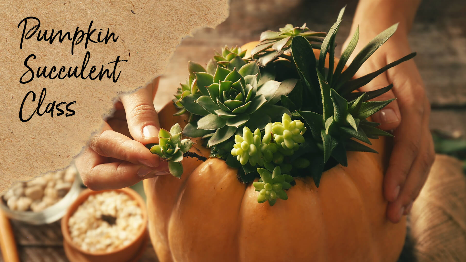 Pumpkin Succulent Class – Sold Out